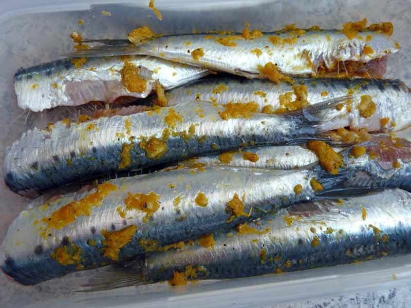 Orangen-Sardinen-eingelegt