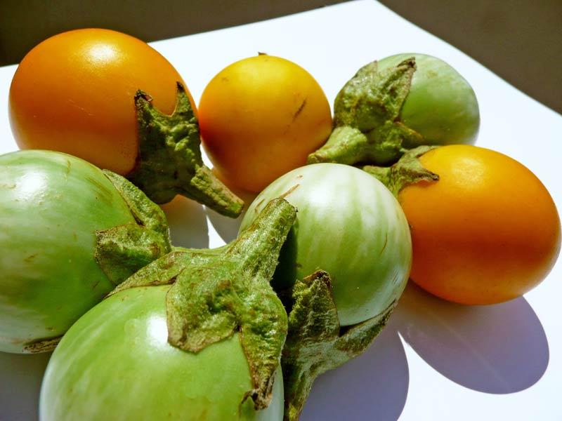 thai-auberginen